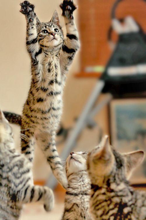 Airborne Cat Fur Funny
