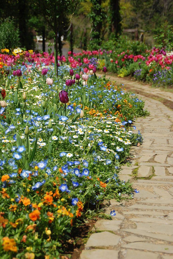 チューリップの足元を飾る春の花々