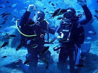 Dive against debris/a reason to dive again #scubadiving #sealsdivingcenter #PADI #paditv #greece