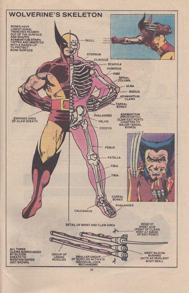 Wolverine's Skeleton.