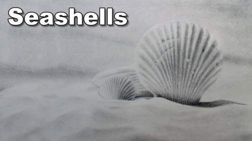 How to Draw Seashells — Online Art Lessons