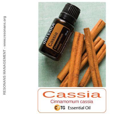 CINNAMON CASSIA Essential Oil - den värmande och lugnande oljan! En värmande olja som går tillbaka till biblisk tid. Cassia främjar matsmältningen och immunförsvaret samtidigt som den har en stark, upplyftande doft. Välkommen att läsa mer på http://resonans.org