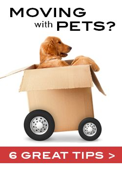 Six Moving Tips When Relocating With Pets -- what a great resource! #moving #pets #MovingTips: Pets Movingtips, Moving Pets, Moving Tips, Dogs, Moving With Pets Tips, Real Estate, Moving Packing, Moving House