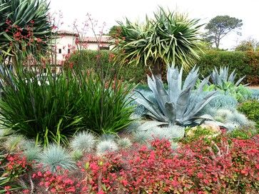 Coastal Gardens: It's highly likely that your coastal soil is mostly sand, so forgo thirsty turfgasses and finicky plants whenever possible and opt for a water-wise alternative. This planting of century plant (Agave americana), blue fescue (Festuca glauca), kangaroo paw (Anigozanthos 'Red Cross') and crown of thorns (Euphorbia milii) is cohesively colorful and thrives on neglect.