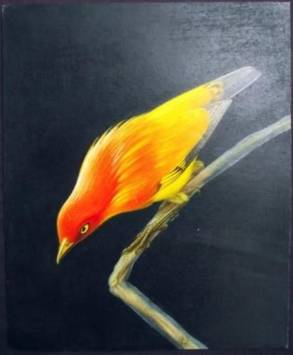 1945 c WALTER LINSENMAIER original coloured Pencil Drawing - Ornithology
