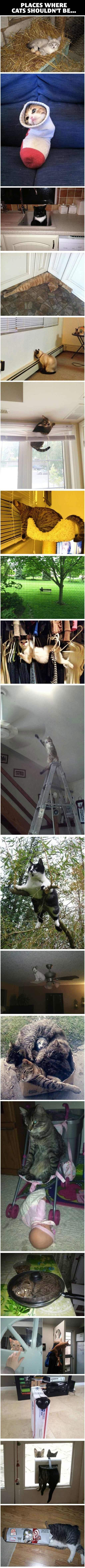 Cats In Places They Shouldn't Be.... -   Misc
