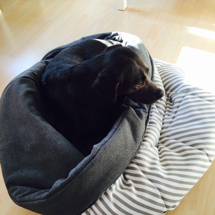 Sewing instructions: Dog sleeping bag | viviendo