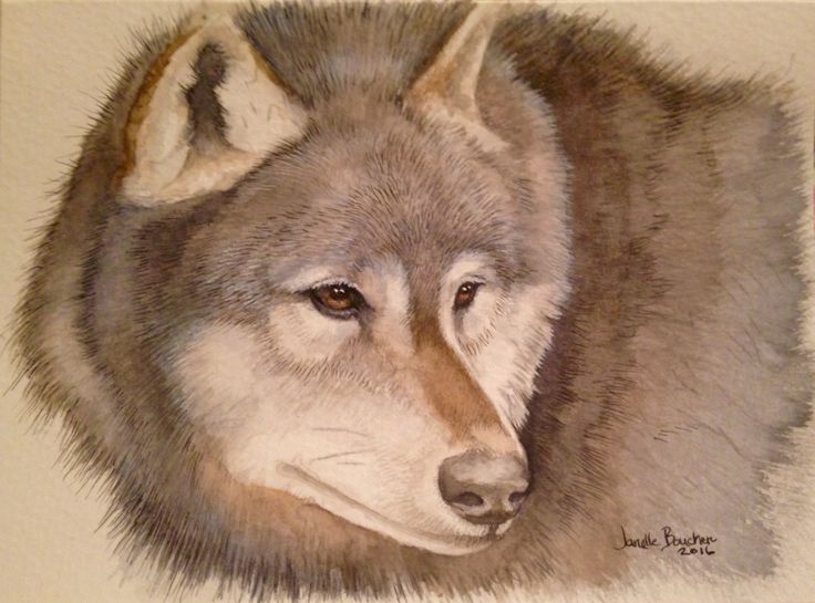 Wolf on watercolour card 5x7 thank you to Wildlife Reference Photos ( I will have to check on photographers name )