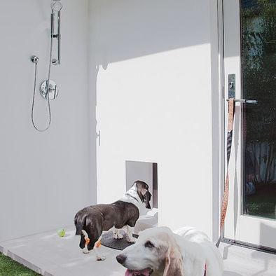 97 Best Dog Wash Dog Bath Images On Pinterest Pets