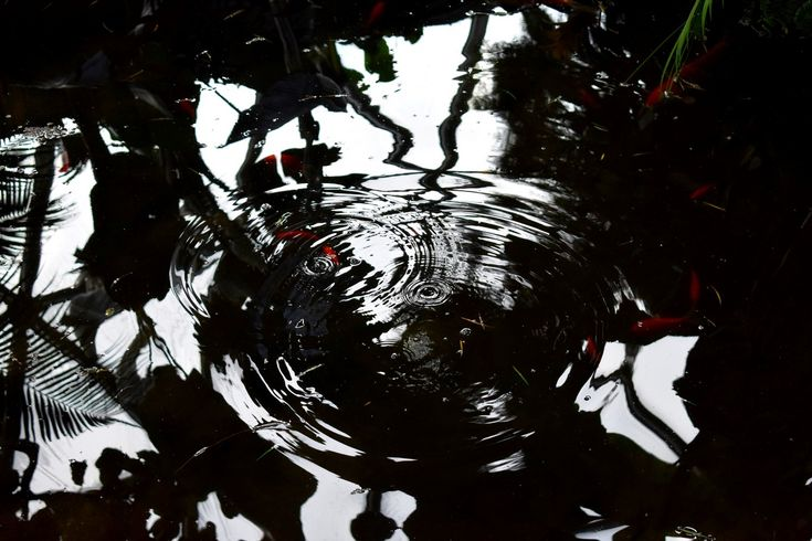 Koi pond, Bloedel Conservatory, Vancouver