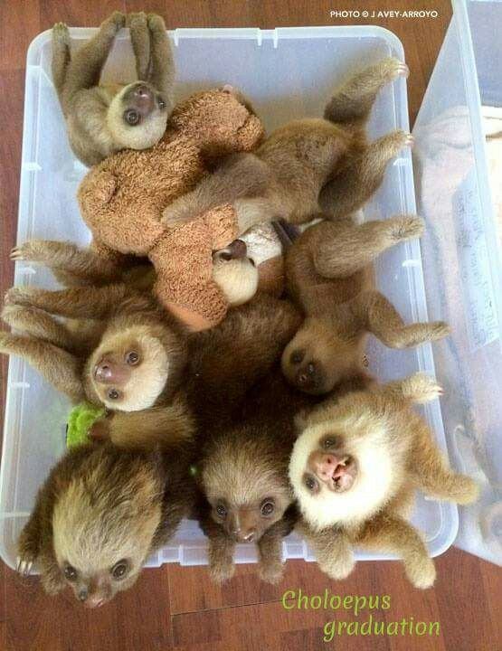 a bucket full of sloths- your argument is invalid!