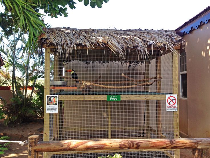 17 Best Images About Outdoor Aviaries On Pinterest
