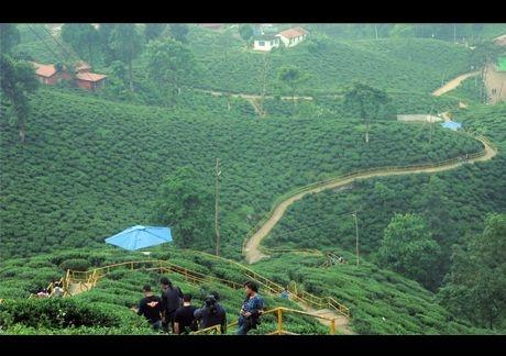Illam Tea Estate