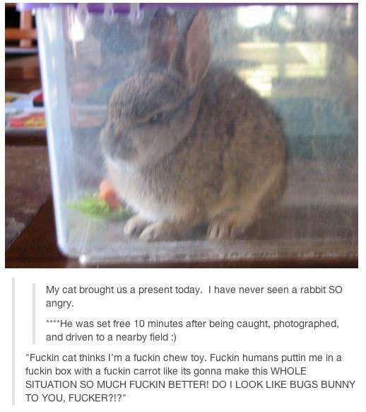 Best 10+ Bunny meme ideas on Pinterest | Pet bunny rabbits ...
