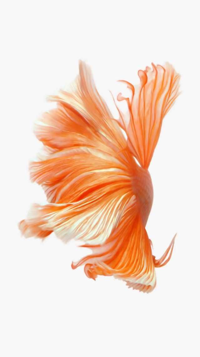 Apple Live Wallpapers Live Wallpaper Iphone Live Wallpapers Live Wallpaper Iphone 7 Fish live wallpaper iphone