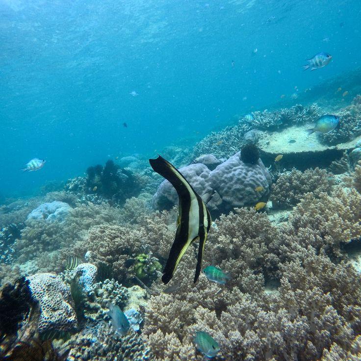 The reefs never ceases to awe us with its abundance in beauty a life! 💙  #fish #underwater #giliasahan #snorkeling #islandlovers #UnderwaterPhotography #scubadiving #underwaterpics #discoverocean #gopro #canon #letsgosomewhere #underwaterworld #ilovediving #goprophotography #travelmore #letsgoeverywhere #beautifuldestinations #ilovesnorkeling #scuba #underwatergallery #gililife #Freediving #underwatersports #coral #gili #giliisland #coralreef #wonderful_places #lombokfriendly