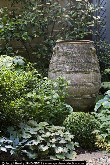A shade garden with ceramic urn surrounded by Sarcocca confusa, Hostas and Geraniums - Vine road summer story