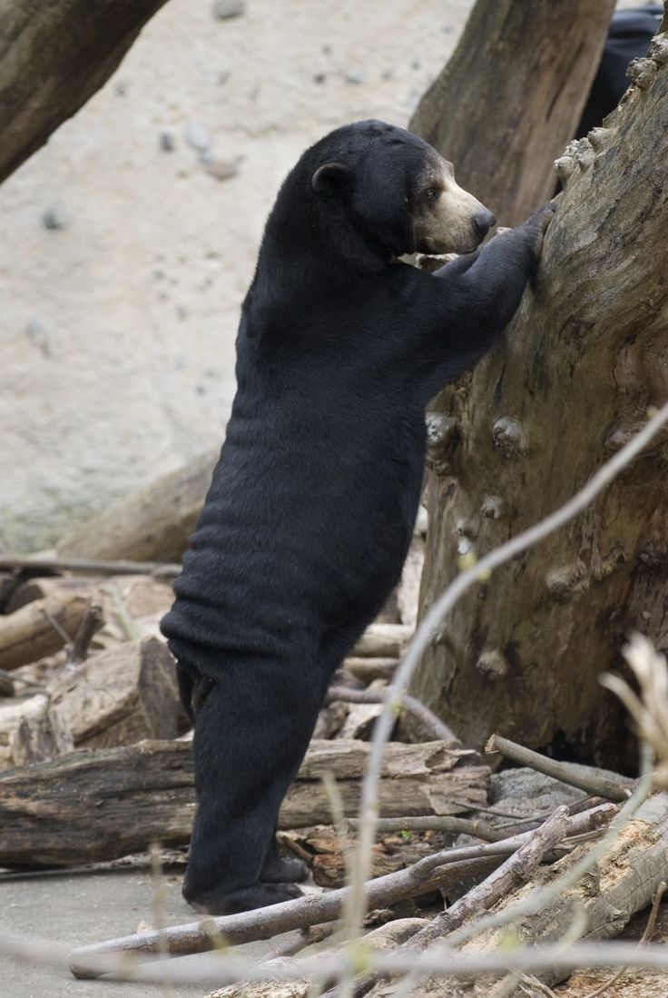 Www Bing Com1 Microsoft Way Redmond: 114 Best Mammals: Carnivora Images On Pinterest