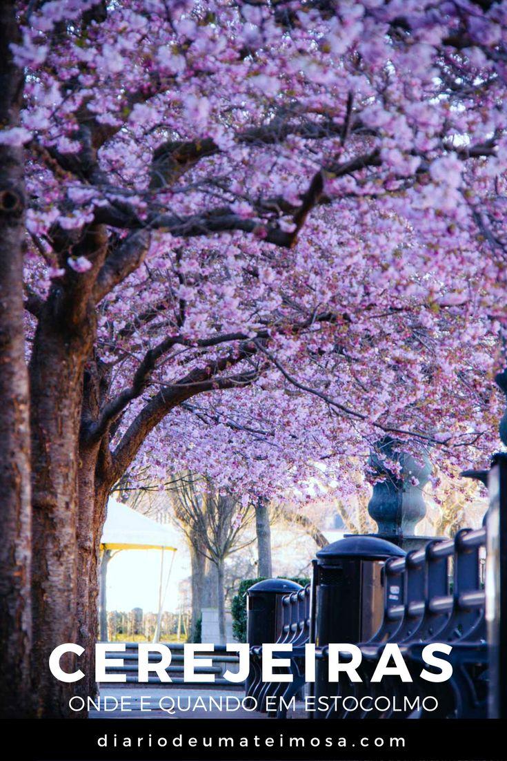 Impossível não se encantar com uma das flores mais lindas do planeta: as cerejeiras. Saiba qual é o parque e a época do ano para ver toda essa beleza em Estocolmo.
