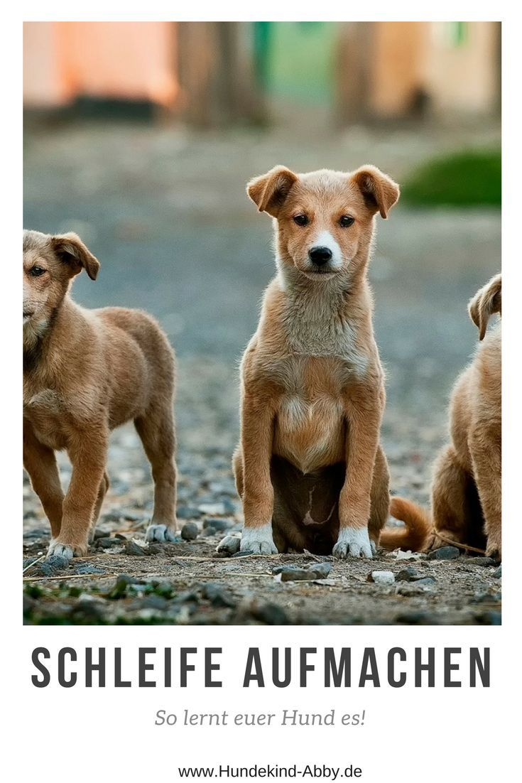 Trick für Trick zum Trickdog: Schleife aufmachen. – Manuela Wölfl-Horvath