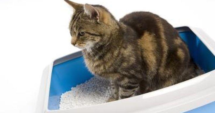 Cómo detener a un gato para que no orine en una alfombra. Para tener un gato le debes prestar atención, darle comida, cobijo y agua. También debes asegurarte de que tu gato esté sano, tanto física como emocionalmente. A veces los gatos pueden estar enfermos o tristes, lo que se manifestará en una mala conducta. Si tienes un gato que orina en la alfombra, necesitas buscar si hay algo que esté mal y ...