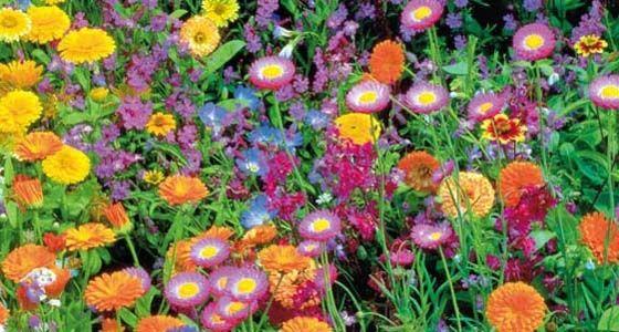 Sommerblumen aussäen - Mein schöner Garten