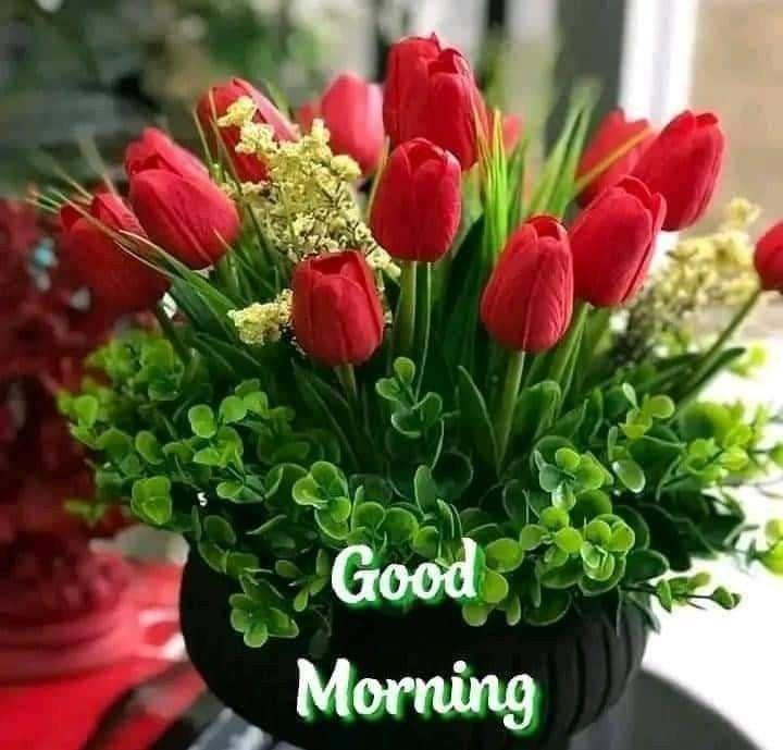 Pin By Ushadas Kusuma On Picture Good Morning Flowers Good Morning Images Morning Greeting Flower wallpaper good morning