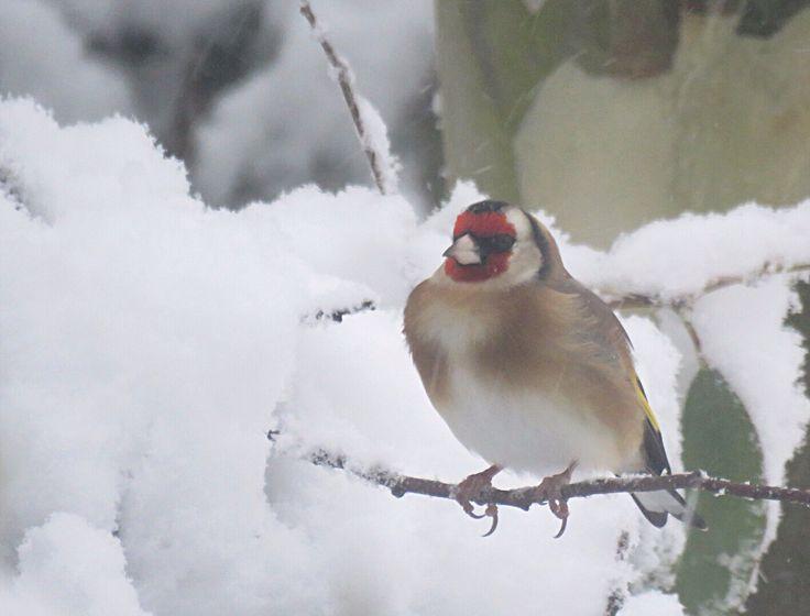 Mejores 170 imágenes de Bird Miscellany en Pinterest | Pájaros ...
