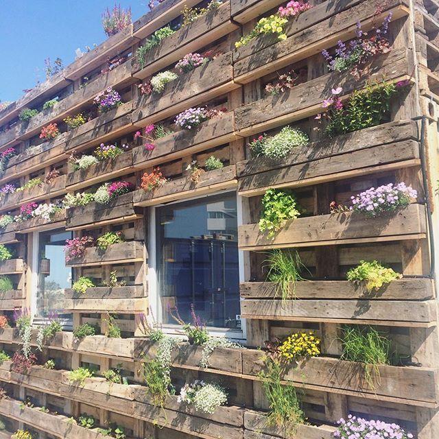 Så fint kan gamle træpaller tage sig ud! Vi er vilde med ideen❤️ #blomstervæg #genbrugspaller #sommer #byhave #aarhushavn