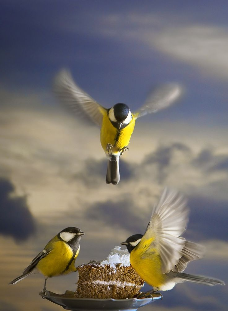 Beautiful Birds - Gr Amazing World