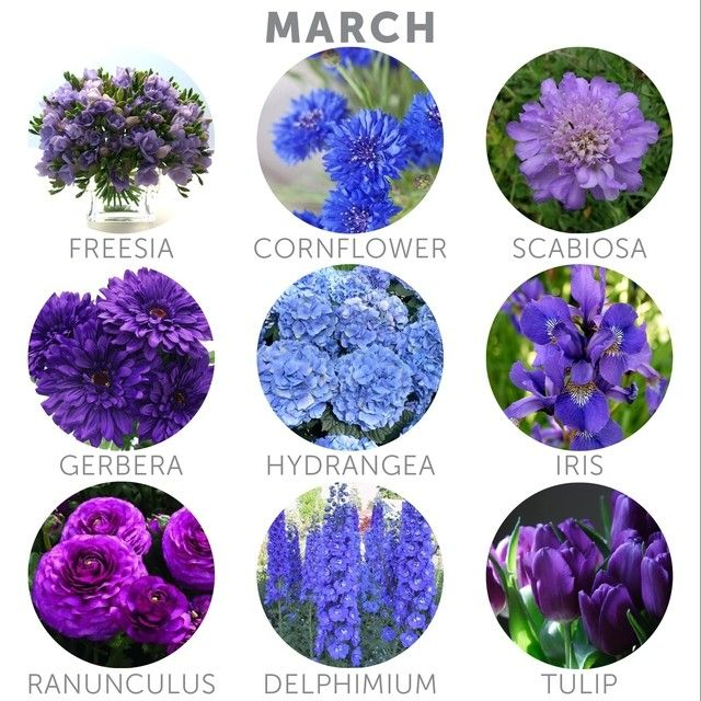 Happy March Here S A Selection Of Some Flower Types That Are Currently In Season Choosing In Season In 2020 Seasonal Flowers Flower Guide Wedding Flower Arrangements