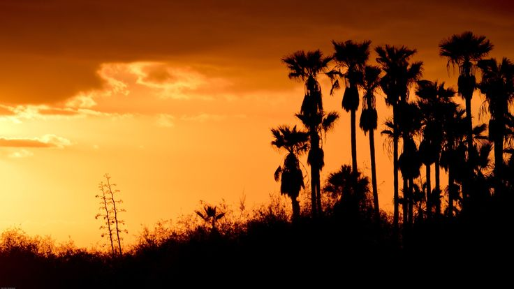 I took this picture on holiday in Tenerife. The sun was about to go down, and colored the sky with warm shades. Palm trees stood quietly in the last breezes from the ocean. It was a proper relaxing atmosphere.