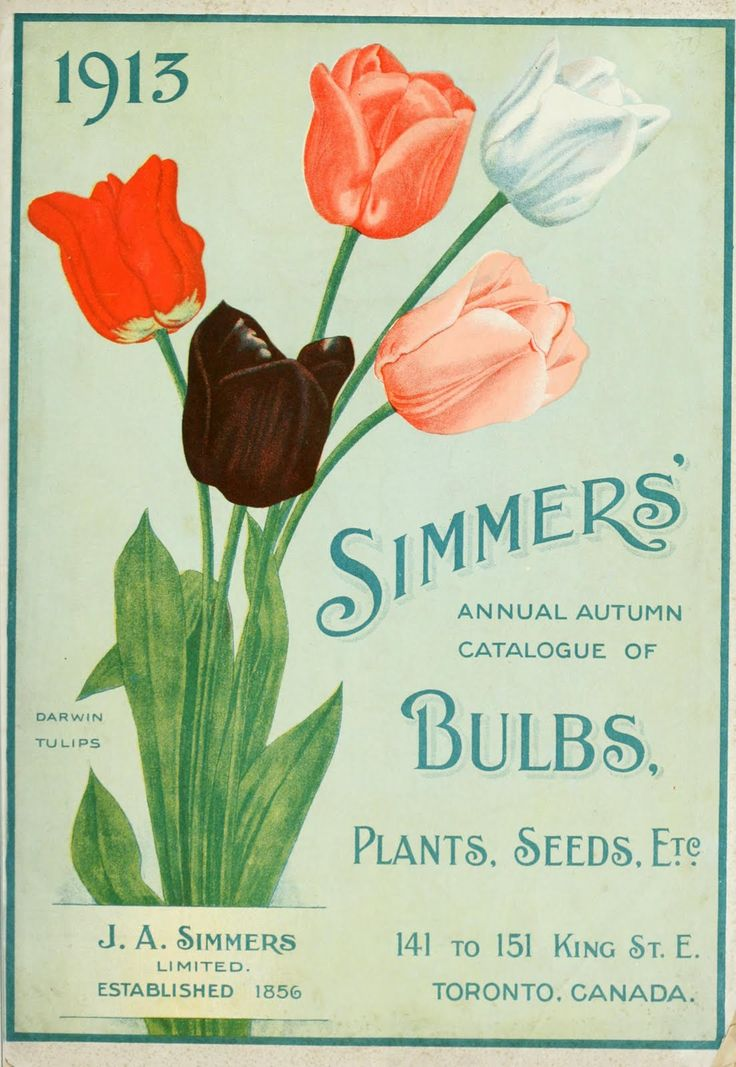 1913 autumn seed catalogue ~ featuring tulips