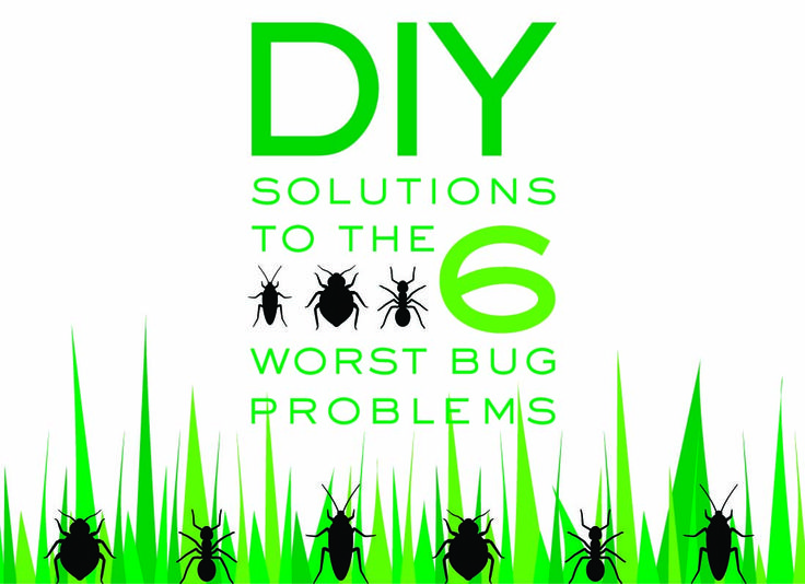 DIY Solutions to the Six Worst Bug Problems byebye