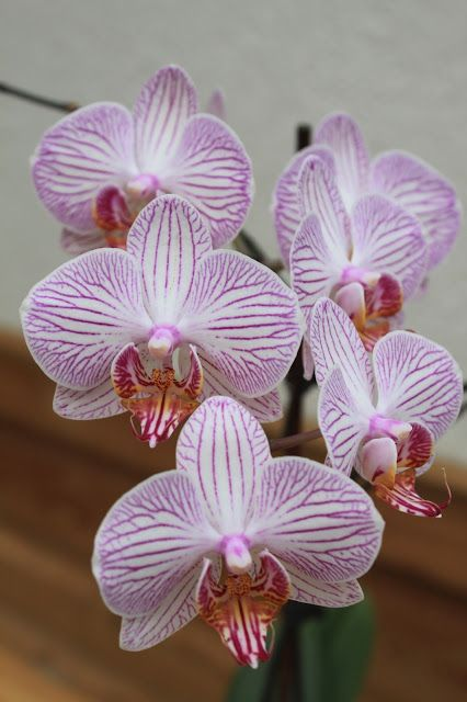 Die Kinderkueche: Pflegetips für schöne Orchideen / rosa Orchideen Blütenmeer
