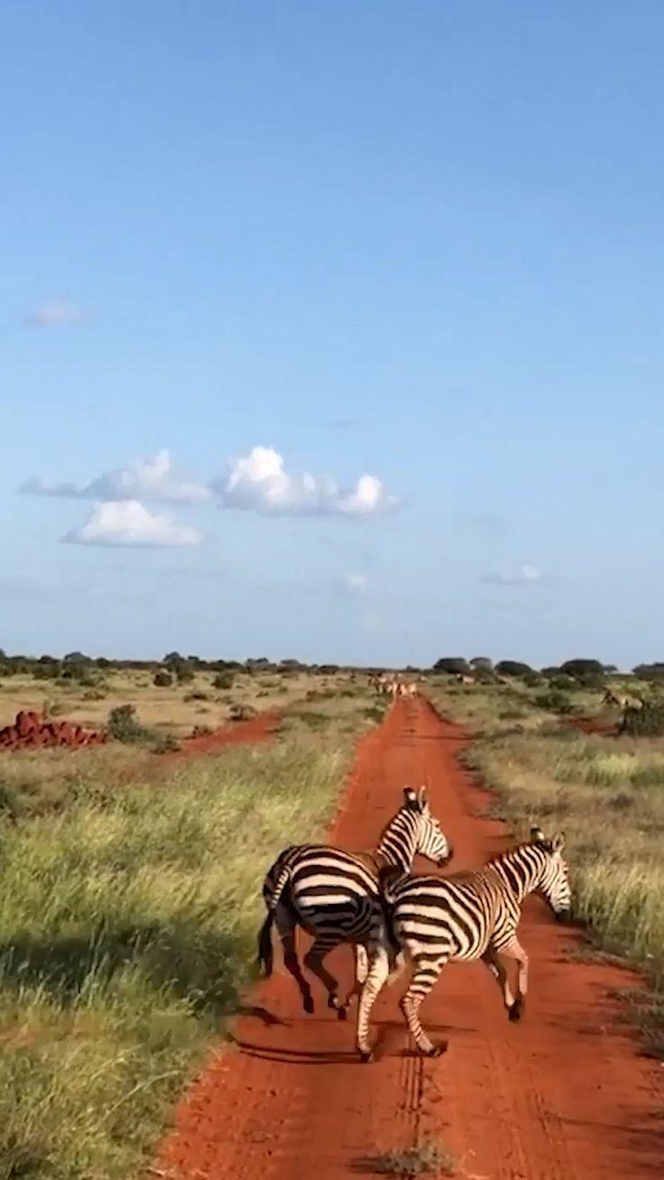 Safari In Kenia Planen Buchen Ab Ins Abenteuer So Planst Du