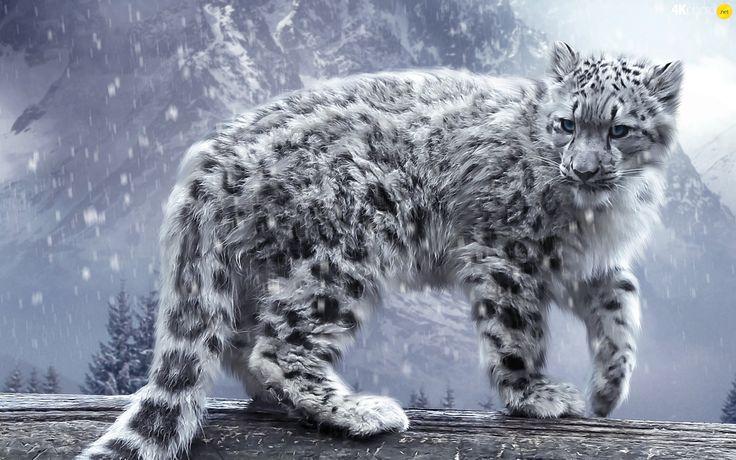 Пантера, снежный барс, снег