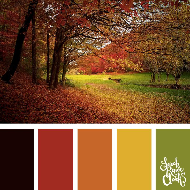 Autumn color palette - green, yellow, orange and red color combination | Click for more color schemes inspired by beautiful landscapes and other coloring inspiration at https://sarahrenaeclark.com | Colour palettes, colour schemes, color therapy, mood board, color hue