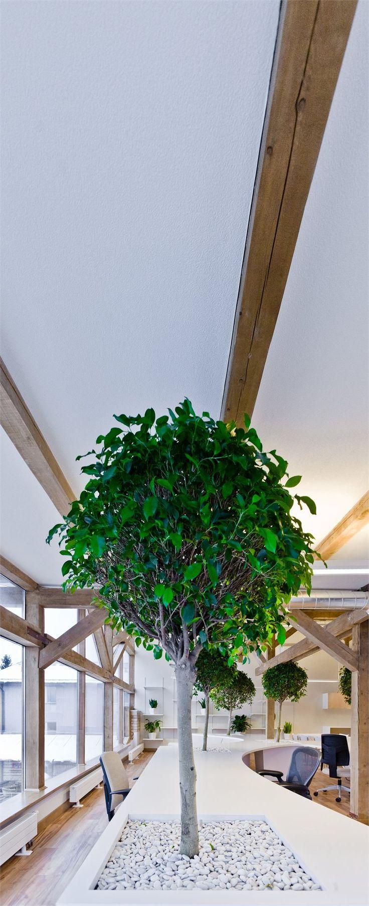 Office #Greenhouse - Riga, Latvia - 2012 - Zane Tetere #green #architecture #interiors #design #office