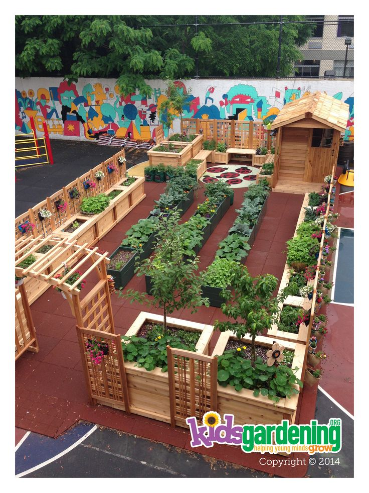 The Today Garden planted and producing fruits and veggies!