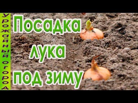 СЕКРЕТЫ ПОСАДКИ ЛУКА ПОД ЗИМУ!НАДЕЖНЫЕ СПОСОБЫ! - YouTube