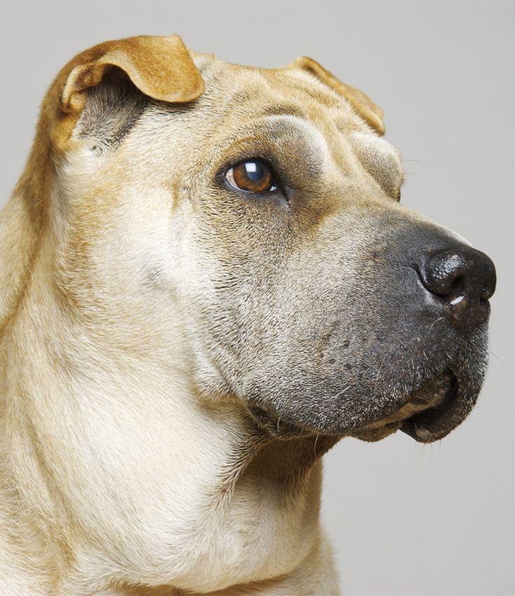 Dog Training Meath