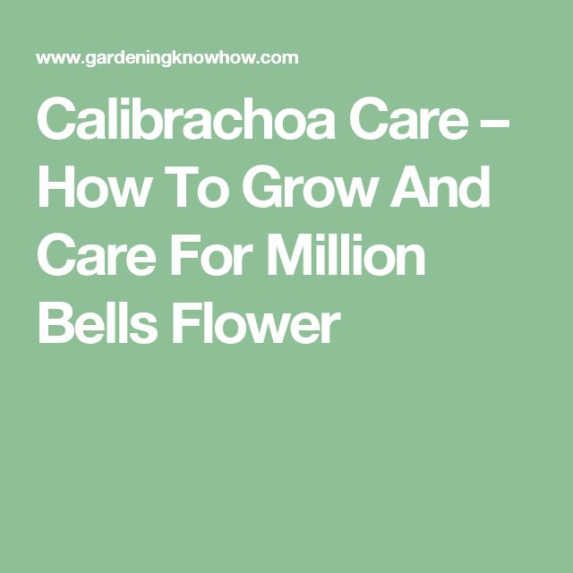 Calibrachoa Care – How To Grow And Care For Million Bells Flower