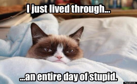 Grumpy Cat has a bad day.