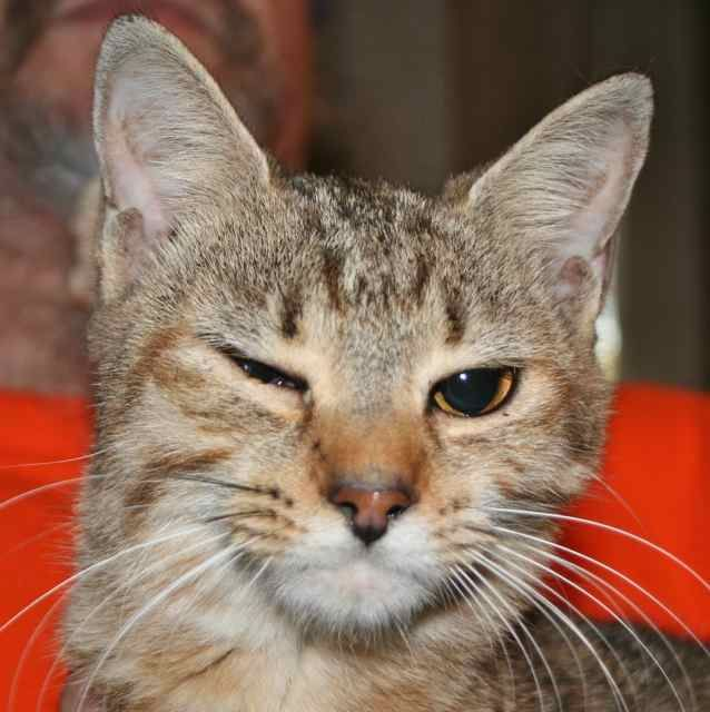 <3 Gloria! Tabby - Brown • Adult • Female • Small. Animal Control of West Florida Chipley, FL. Gloria is a beautiful female brown tabby with a super sweet personality! Both of her eyes are fine, for some reason she just liked to wink at the camera! Very friendly & loves to cuddle, she's a great companion to curl up in your lap & keep you company while you watch a movie or just sit back for some relaxation.