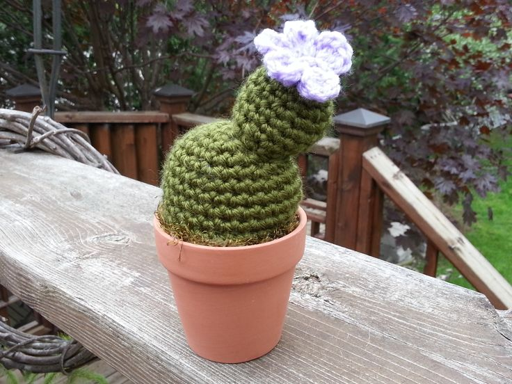 """Handmade, crocheted TWO PADDLE Cactus in 3 1/8"""" Terra Cotta pot with Moss Soil. These realistic cactus mimic a Two Paddle Cactus and a great ornamental plant. These will live forever, with NO need for water or care.  If you would like to mix & match from collection ... Lettuce Cactus, Thumbs Up Cactus, Cross Cactus, Two Paddle Cactus, Star Cactus, Dark Barrel Cactus, Light Barrel Cactus, Saguaro Cactus, Four Paddle Cactus"""