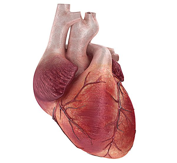 настоящее человеческое сердце - Поиск в Google
