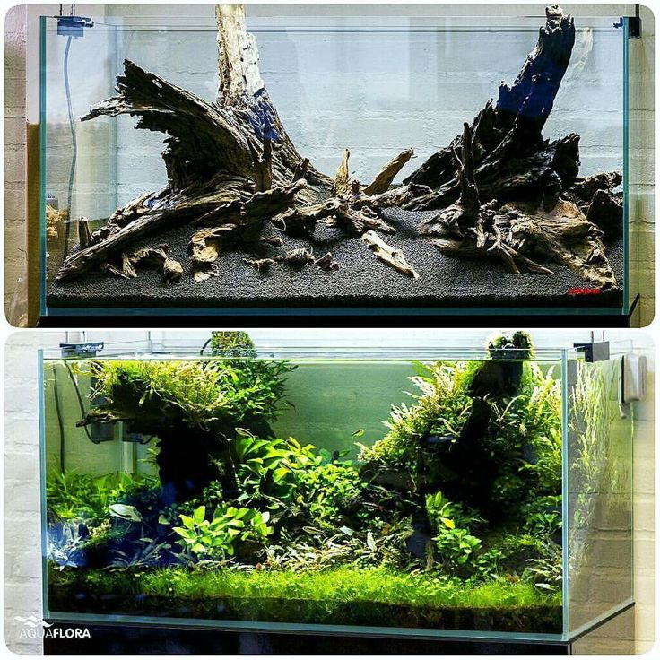 Before and after. 90cm planted aquarium in our showroom, 10 months old. This aquarium has low demanding aquatic plants and it is running without CO2 injection since the first day. #Aquaflora #FAAO #Aquascaping #Planted #Aquarium #Aquatic #Plant #Freshwater #aquascape #Plantedtank #plantedaquarium #showroom