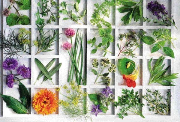 Βότανα που βοηθούν την οστεοπόρωση