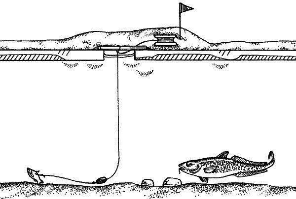 устройство для ловли хищника на льду картинки думают, что